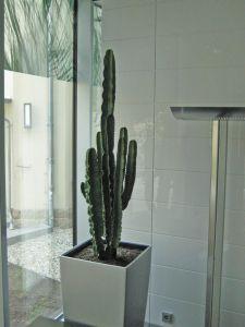 plant5