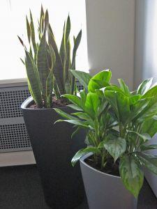 plant9